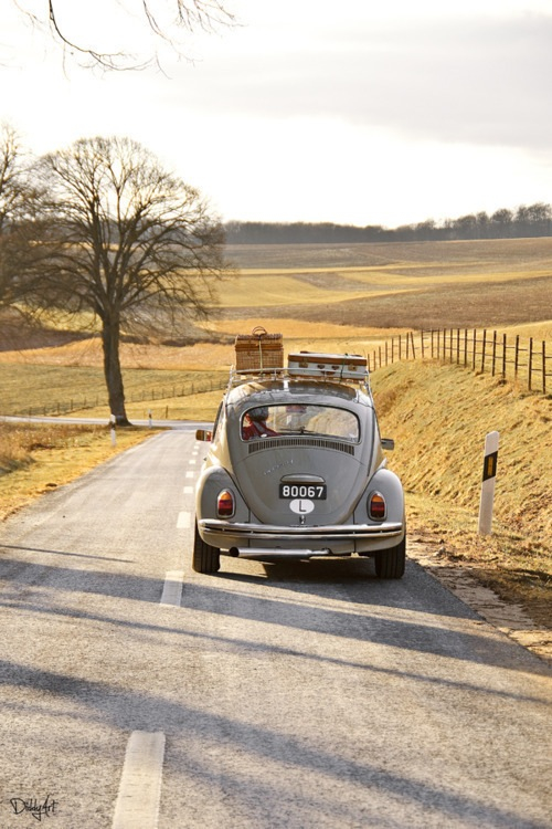 cool, cute, landscape, nature, nice, old car, places, tree
