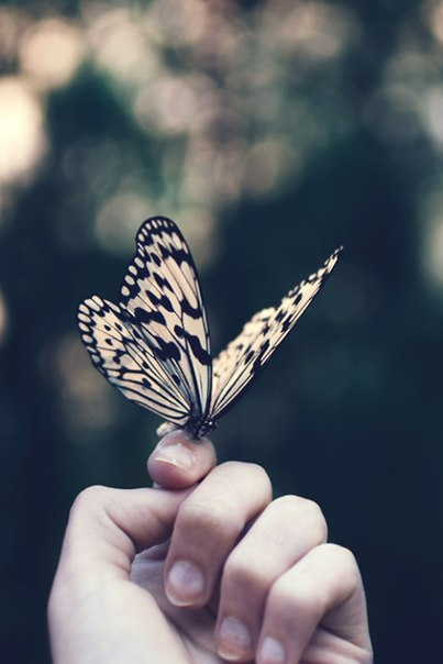 animal, beautiful and butterfly