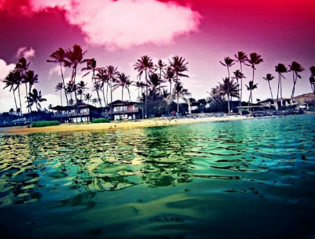 aloha, be free, beach and forever young