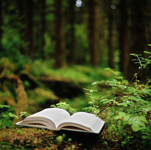 book, forest, moss, nature, washington state, woods, olympic national park