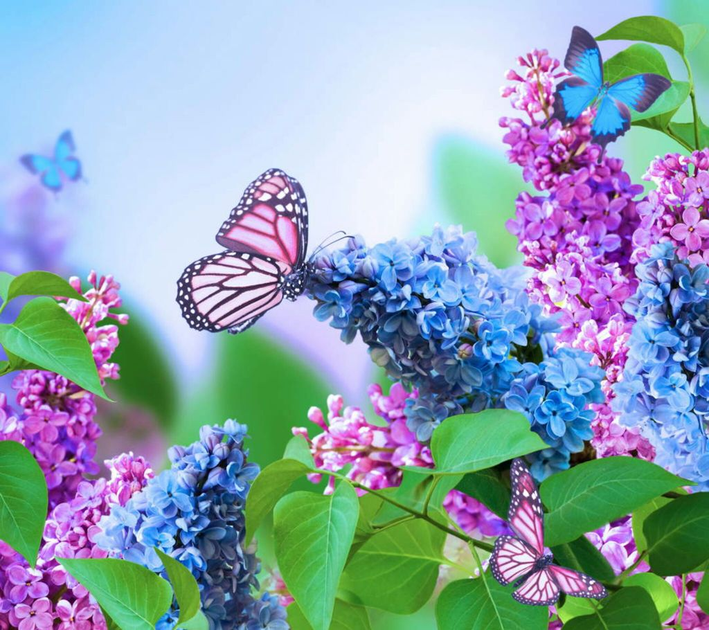 blossoms, butterfly and floral