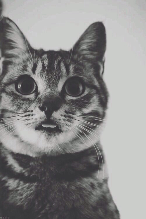 Related Keywords & Suggestions for hipster cat tumblr