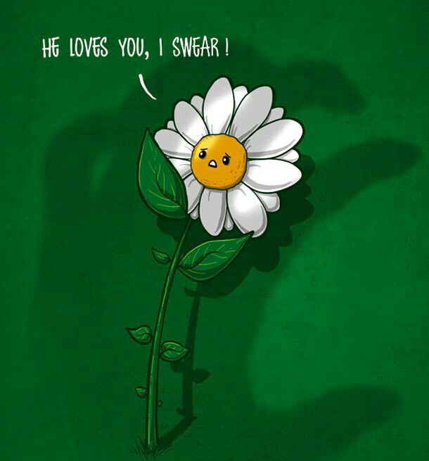humor, flowers, chamomile, love, guessing, funny, lol