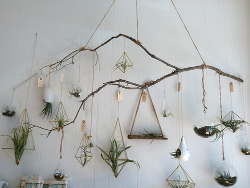 Plants via tumblr image 2703536 by lady d on for Air plant wall hanger