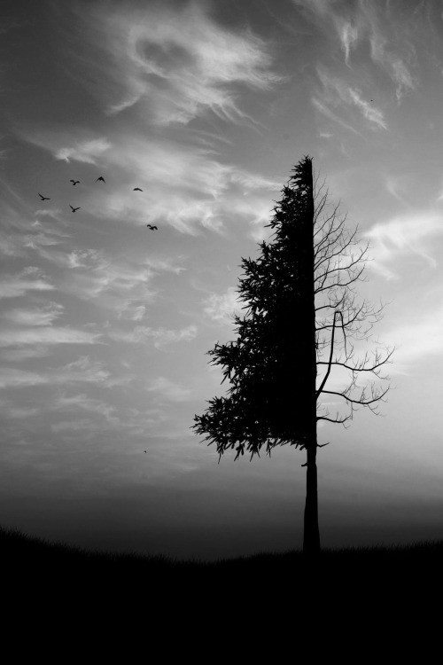birds, black and white, branches and darkness