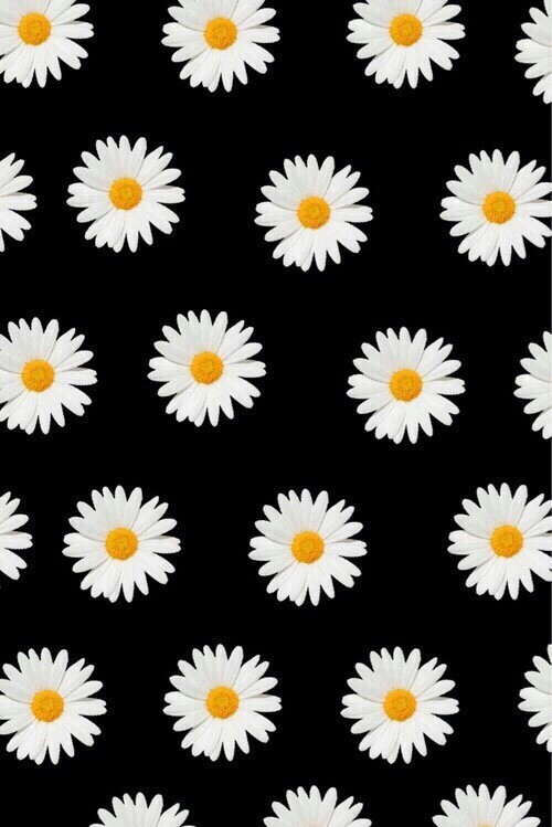 Daisy pattern wallpaper - photo#2