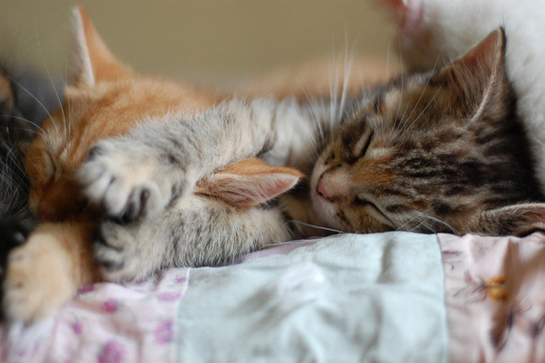 animals, cat, cats and cute