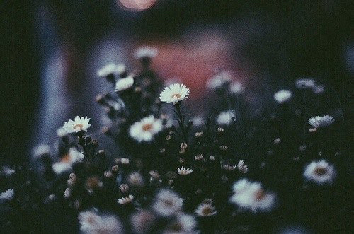 chamomile, flowers, sadness, wow, ​beautiful