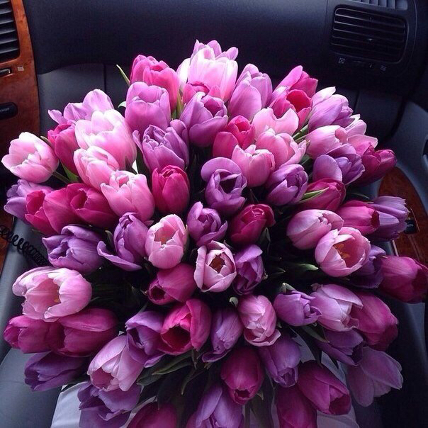 bouquet, bunch, car and cars