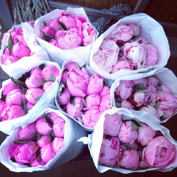 amazing, awesome, background, beautiful, beauty, cute, design, floral, flowers, girly, gorgeous, inspiration, love, luxury, peonies, peony, pink, plant, pretty