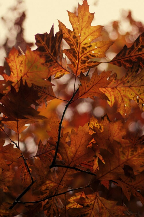 to autumn autumn and october dawn that Lady's essential autumn packing list for london september 6, 2016 autumn is in the air or it's supposed to be london's had mixed weather lately, but i'm sure things will return to normal soon.