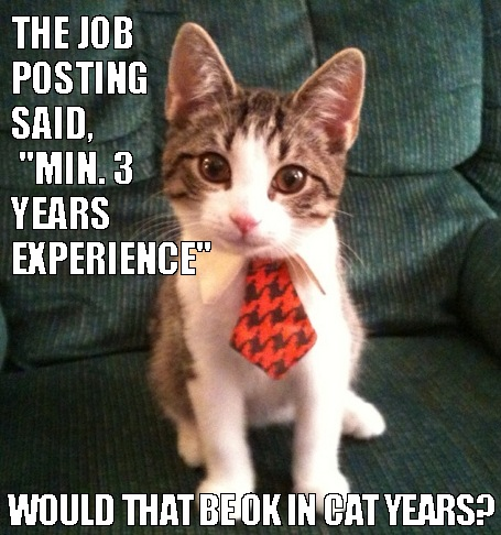 cat, experience, funny and job interview