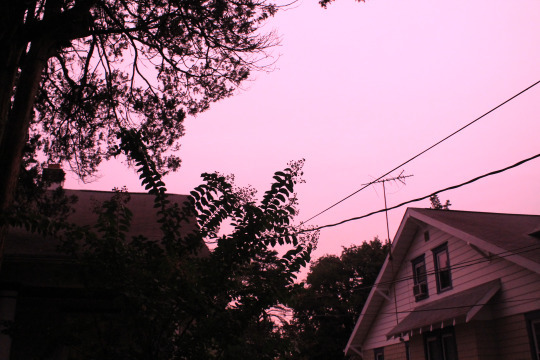 Image result for dark pink aesthetic