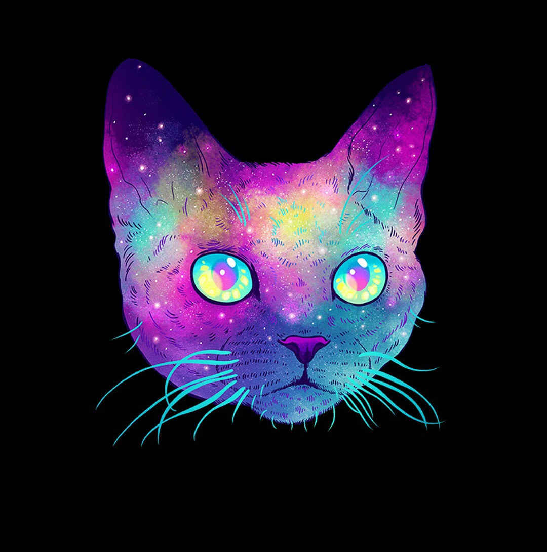 beatiful, cat, colors, eyes, gato, neon