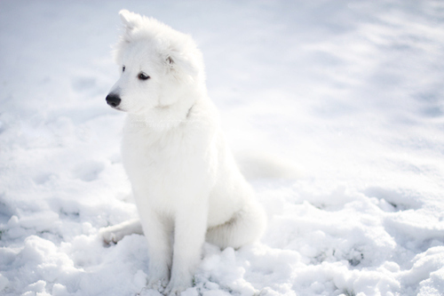 cute, dogs, snow, white dog, winter, ♥, cutieeeeeee