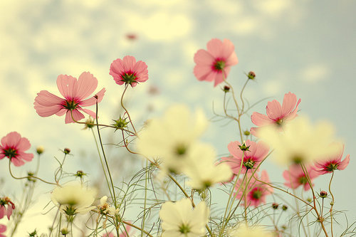 art, cute, fashion, flowers, glitter, nature, pastel, pink