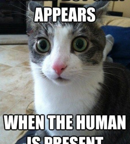 Funny Gusta Funny Picture Cute Cat Cute Kitty Image 564456 On