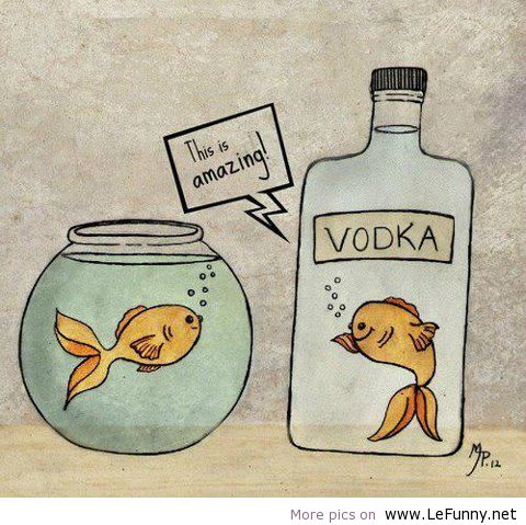 2012, animals, art, cartoons, demotivational, derp, derpina, funny jokes, humor, jokes, messages, nature, people, photography, pics, pictures, pranks, quotes, sayings, stories