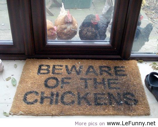 Cartoon Pics And Quotes About Chickens: Lefunnynet, Quotes, Animals, Pictures