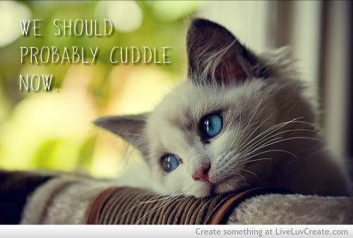 adorable, cat, couples and cuddling