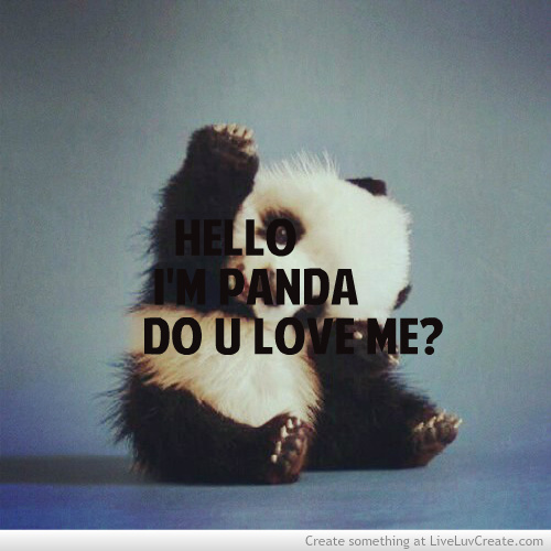 Funny Animal I Love You Quotes : Funny Panda Quotes. QuotesGram