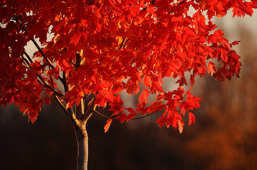 alone, autumn, autumnal and colours