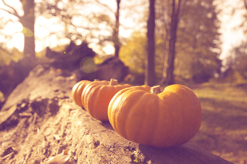 art, autumn, country, fall, heart, love, orange, photo, pretty, pumpkin, pumpkins, sun