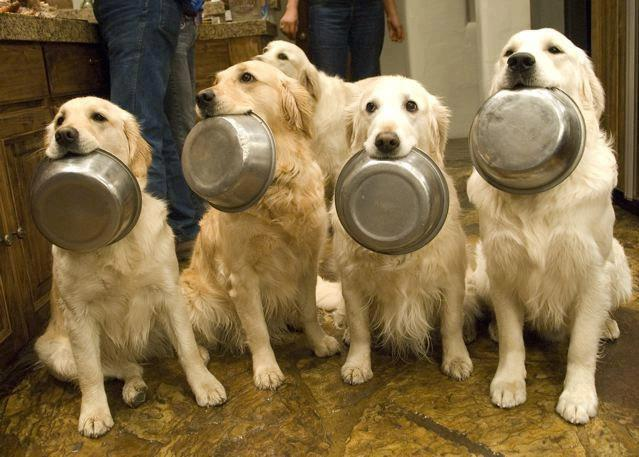 cute, dogs and hungry
