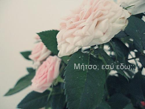 Flowers Funny Greek Quotes Inspiring Picture Favim