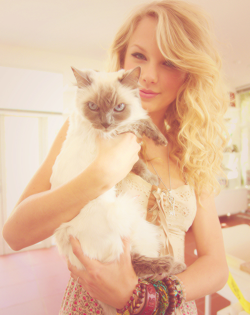 beautiful, cat, photography and taylor swift